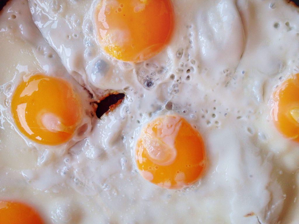 albumina da clara do ovo